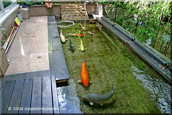 Karpers In Tuin : Japanse watergarden amstelveen