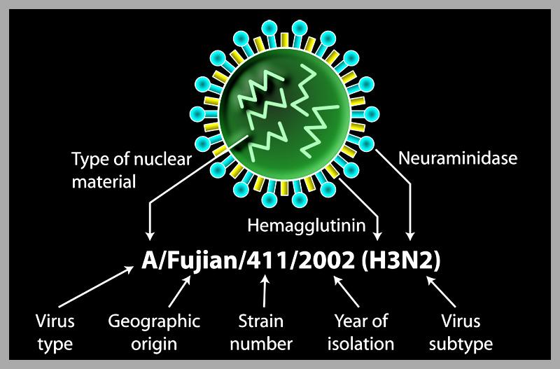 virus bij mensen