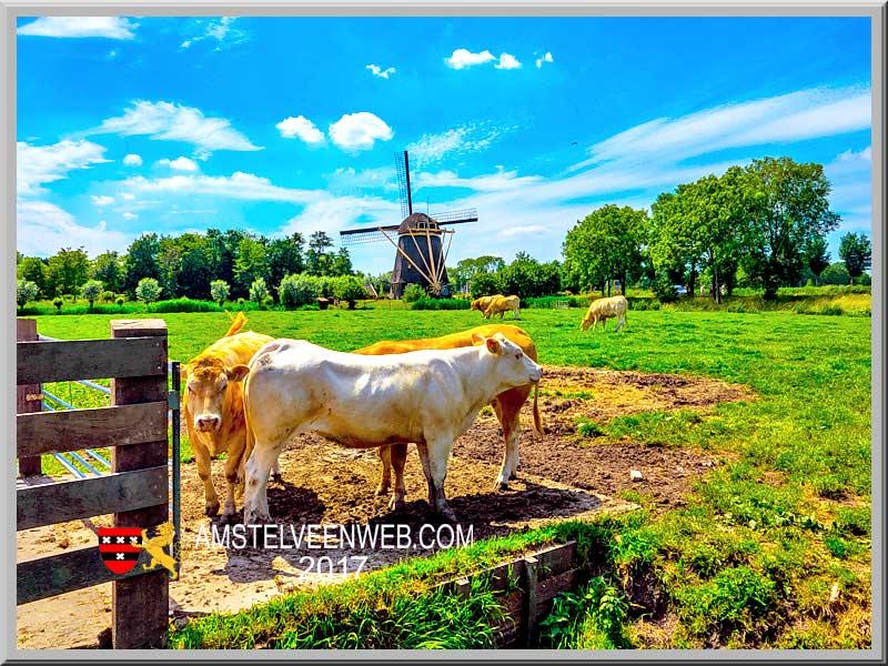 11de Amstellanddag